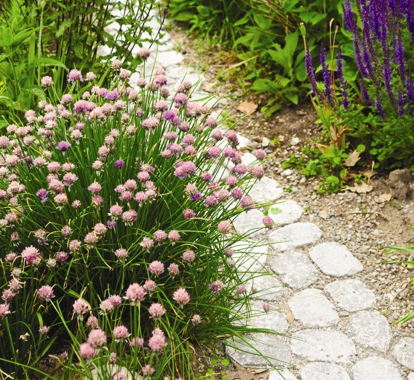 Дорожка из тротуарной плитки в окружении садовых цветов