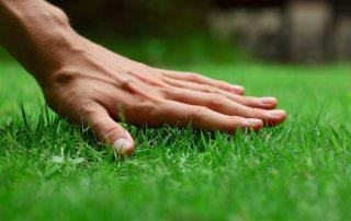Газонная трава, которая уничтожает сорняки и ее агротехника