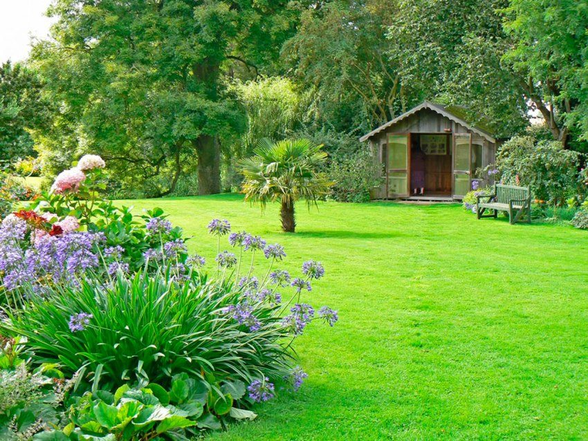 Газонная трава на загородном участке