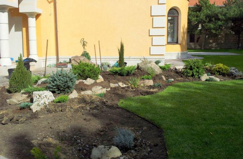 Шаг 3: высадка многолетних растений