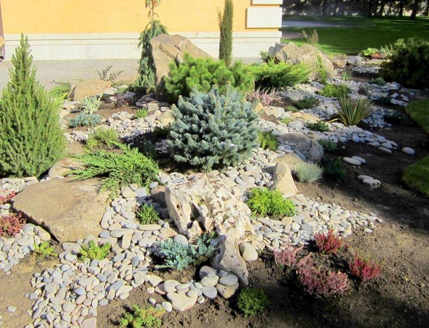Шаг 4: высадка хвойных растений