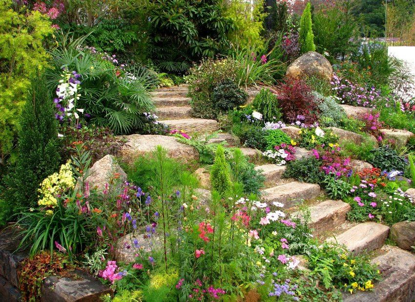 Альпинарий по обе стороны садовых ступеней