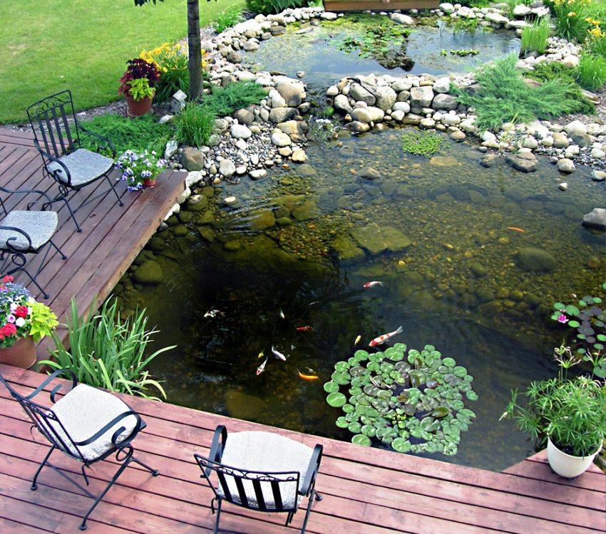 В водоеме на даче можно разводить рыб