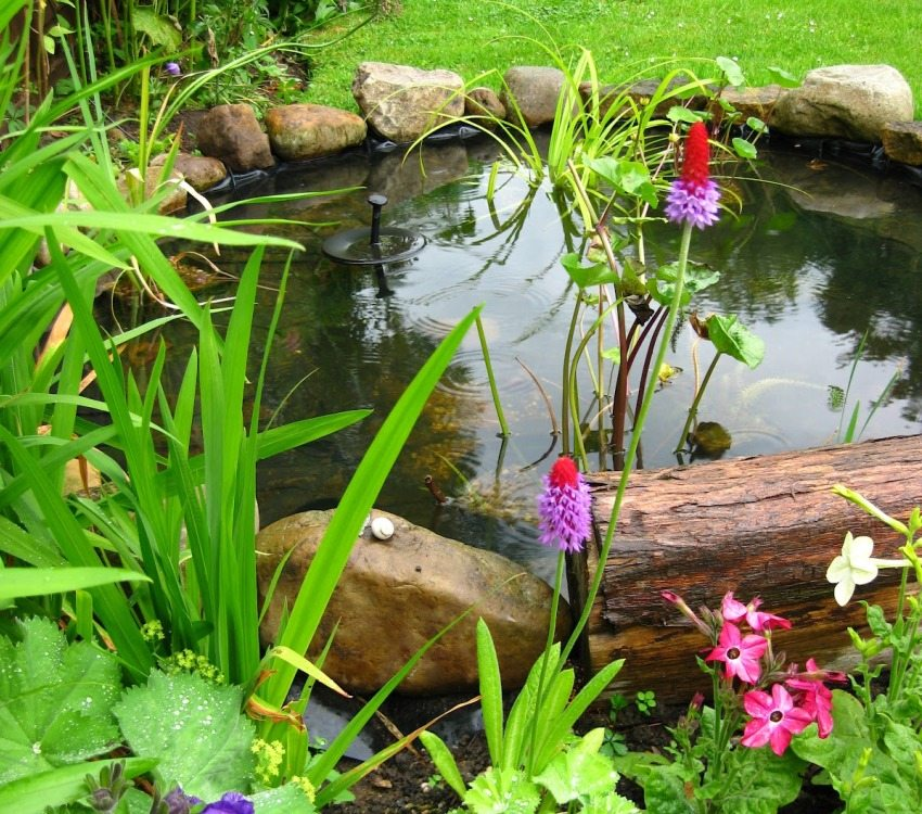 Украсить дачный пруд можно цветами и растениями