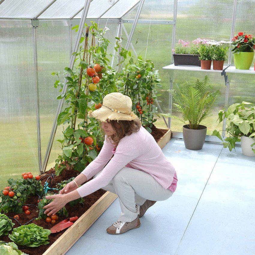 Способность поликарбоната пропускать солнечный свет и защищать от ультрафиолетового излучения способствует интенсивному росту выращиваемых культур