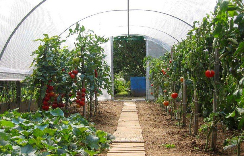 Форма, размеры и выбор материалов зависят от растений, которые предполагается выращивать в теплице