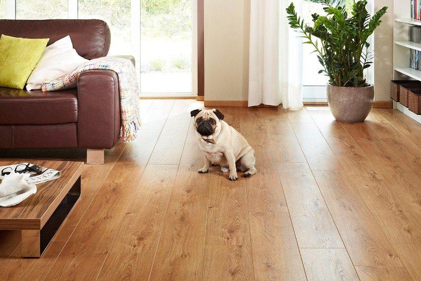 Если в квартире имеются домашние животные - необходимо выбирать ламинат с самым высоким классом износостойкости