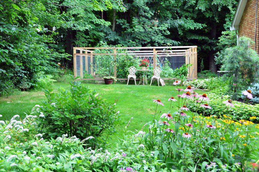 Дачный участок может быть как оазисом отдыха, так и местом для выращивания фруктов и овощей