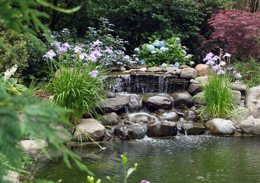 Идея дизайна рукотворного водоема на участке