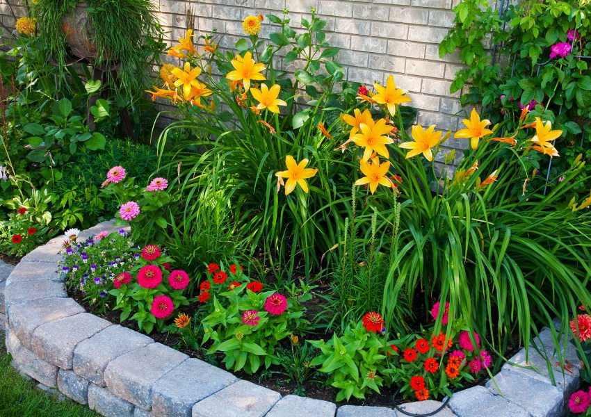 Цветы являются неотъемлемой частью любого дачного участка