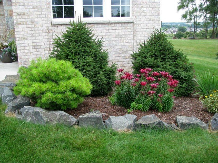 Хвойные растения будут смотреться очень элегантно в любом стиле дизайна участка