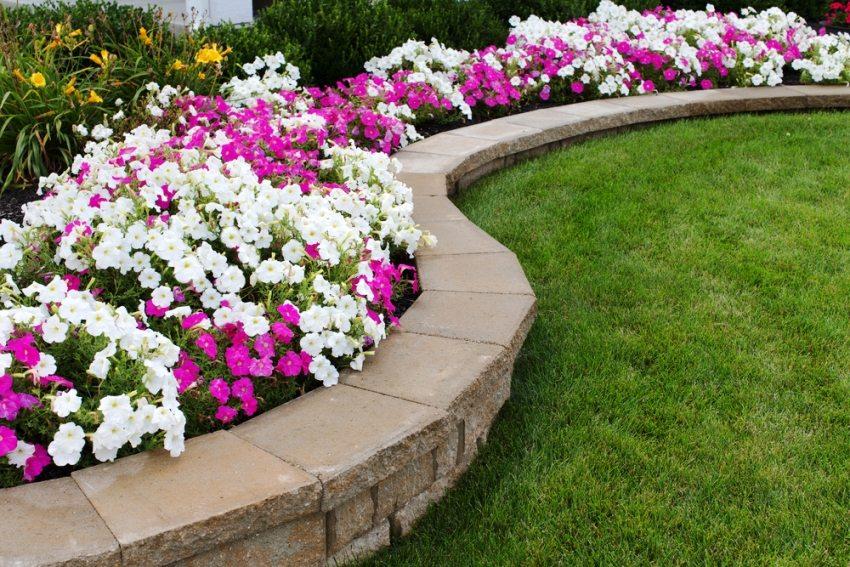 Цветник из белых и розовых петуний