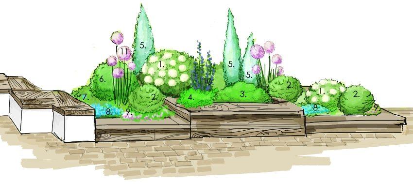 Схема миксбордера: 1 - гортензия древовидная; 2 - лапчатка кустарниковая; 3 - спирея японская; 4 - манжетка мягкая; 5 - можжевельник Sky rocket; 6 - астра Blaubux; 7 - астра альпийская; 8 - вероника армянская; 9 - гвоздика травянка; 10 - дельфиниум; 11 - лук гигантский