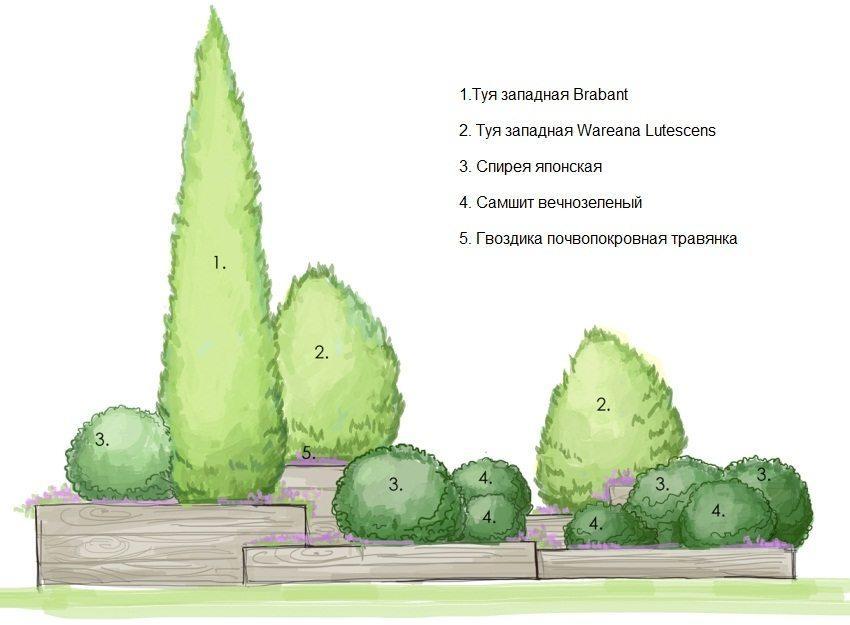 Схема создания миксбордера из хвойных кустарников