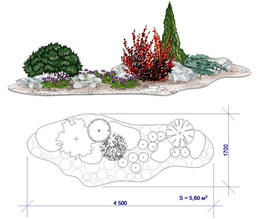 Схема рокария с барбарисом и сосной