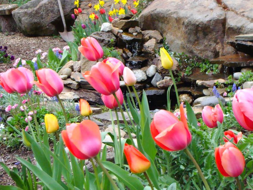 Растения для рокария необходимо подбирать с учетом времени их цветения