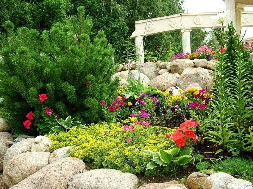 Хвойники являются базовыми растениями в рокарии