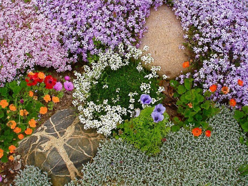 Цветущие почвопокровные растения радуют глаз яркими красками и выполняют защитную функцию, укрепляя грунт