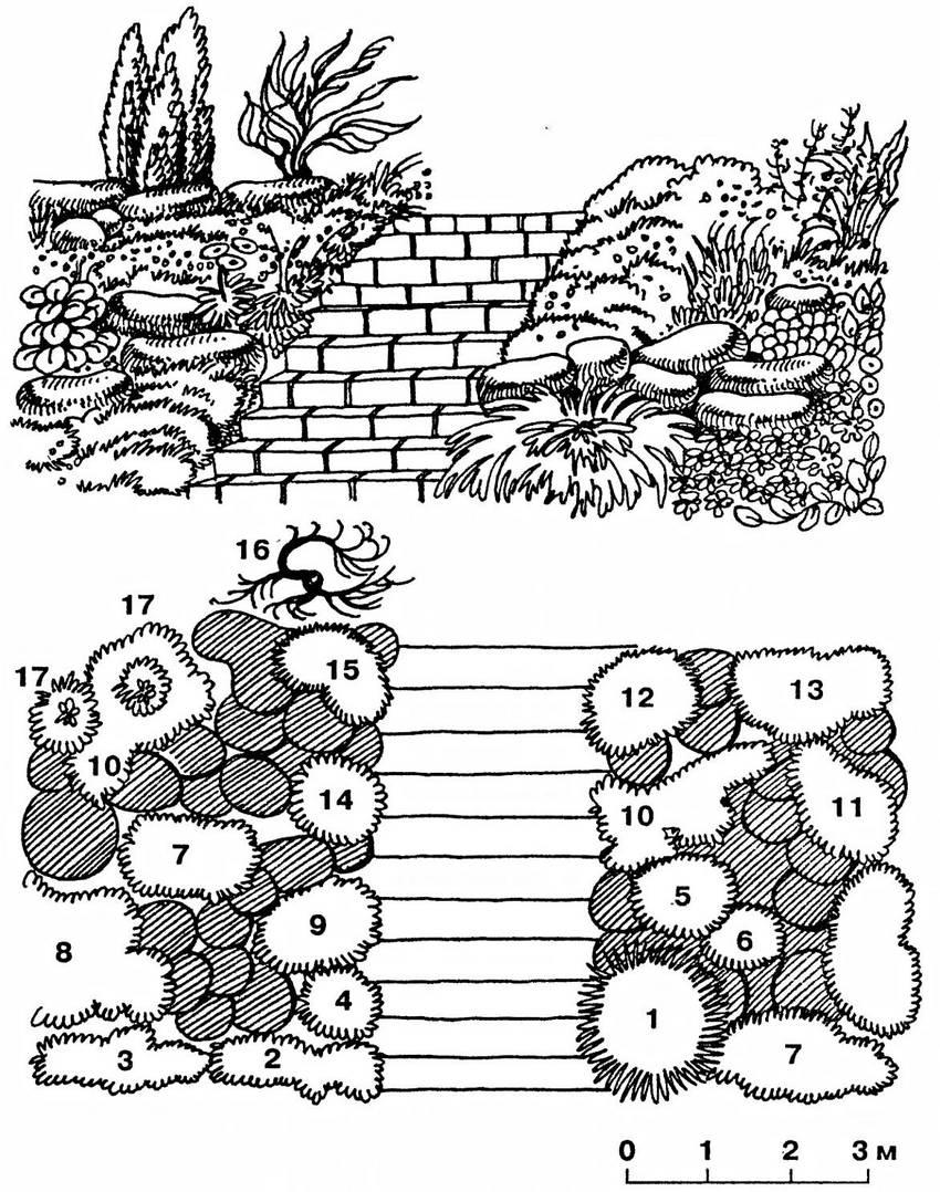Декоративная горка-рокарий: 1 - кизильник горизонтальный; 2 - арабис альпийский; 3 - фиалка душистая; 4 - иберис; 5 - ясколка; 6 - гвоздика дернистая; 7 - камнеломка; 8 - дорокум кавказский; 9 - колокольчик карпатский; 10 - флокс гниловидный; 11 - дицентра; 12 - гипсофила; 13 - солидаго канадский; 14 - алиссум; 15 - астра альпийская; 16 - тамарикс; 17 - можжевельник обыкновенный