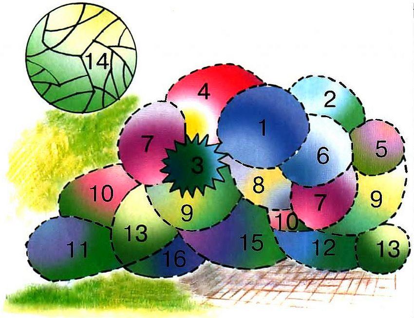 Схема пышной клумбы, украшающей фасад дома (размеры цветника - 4 х 3,5 м): 1 - мордовник обыкновенный; 2 - вероникструм виргинский; 3 - колосняк песчаный; 4 - космос дваждыперистый; 5 - георгина культурная; 6 - синеголовник альпийский; 7 - флокс метельчатый; 8 - полынь Людовика; 9 - антирринум большой; 10 - агератум Хоустона (высокорослые сорта); 11 - котовник Фассена; 12 - агератум Хоустона (низкорослый сорт); 13 - бархатцы прямостоячие; 14 - дерен белый; 15 - гелиотроп перувианский; 16 - петуния садовая