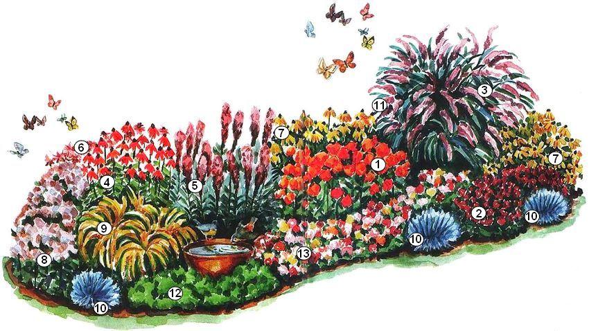 Схема цветника с медоносными растениями, привлекающими бабочек: 1 - ваточник клубневый (или тысячелистник «Anthea»); 2 - астра новоанглийская «Purple Dome» (или «Red Star»); 3 - буддлея Давида; 4 - эхинацея пурпурная «Bright Star» (или флокс метельчатый «Eva Cullum'l»); 5 - лиатрис колосковая «Floristan Violet»; 6 - монарда двойчатая; 7 - рудбекия блестящая «Goldsturm» (или кореопсис крупноцветковый «Sunray»); 8 - очиток «Matrona» (или ирис «Bandury Ruffles»); 9 - золотарник «Golde Fleece» (или скабиоза «Butterfly»); 10 - овсяница сизая «Elijah Blue» (или молочай многоцветный); 11 - лобулярия морская; 12 - петрушка кудрявая; 13 - цинния изящная