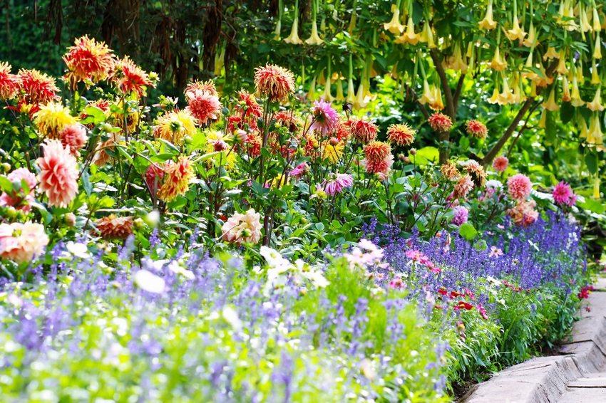 От размеров и расположения будущего цветника зависит выбор количества растений, их видов