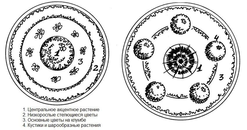 Схема размещения растений на клумбе из автомобильных шин