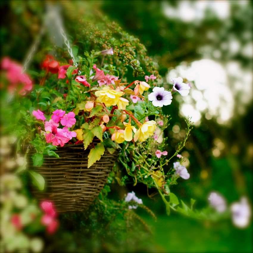 В качестве кашпо для емкости с цветами использована обыкновенная корзина