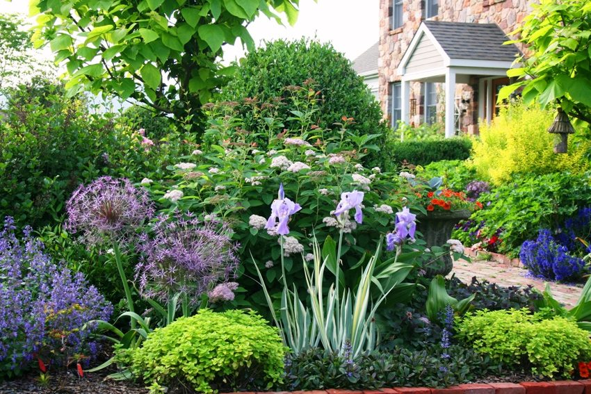 A combination of different types of garden flowers will decorate the country plot