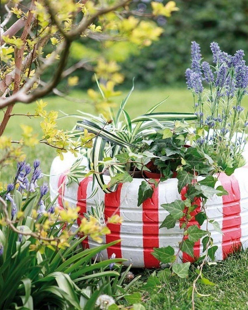 Для клумб из старых покрышек отлично подходят различные вьющиеся растения