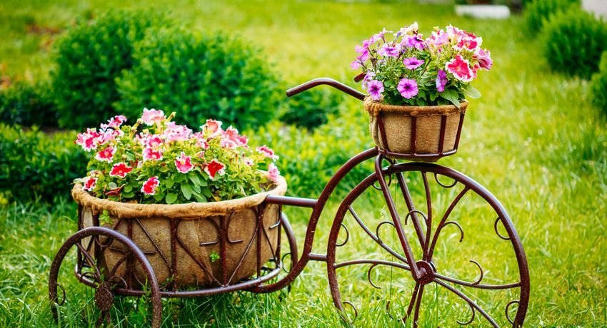фото домашних свисающих цветов