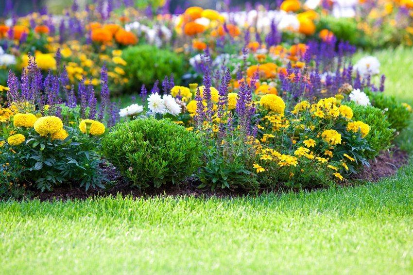 В клумбе сочетаются разные виды цветов