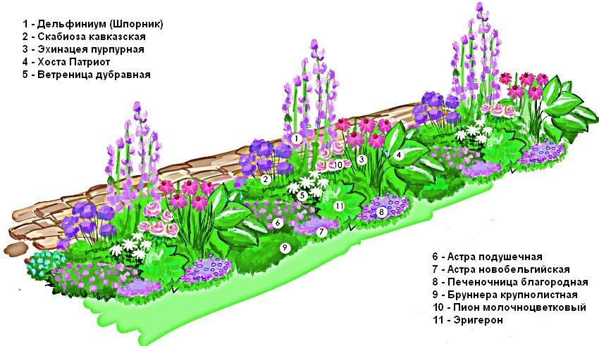 Схема оформления рабатки, состоящей из многолетних растений