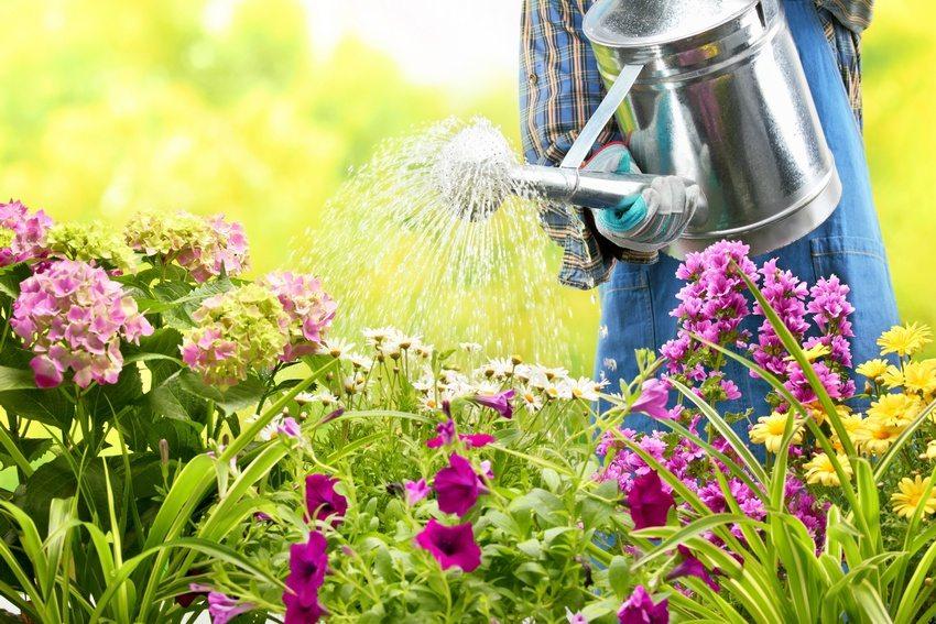 Благодаря регулярному уходу цветник будет радовать глаз в течение всего теплого времени года