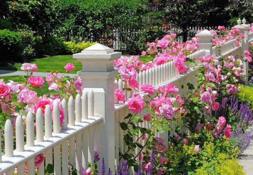 Миксбордер из цветов разной высоты, украшающий изгородь