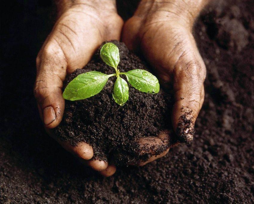 Правильный подбор растений позволит создать красивый цветник вне зависимости от типа грунта