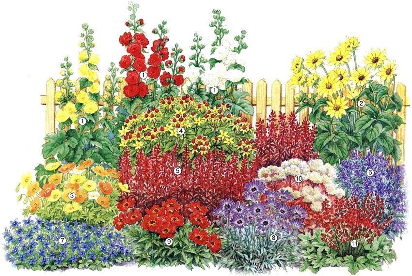 Схема клумбы из многолетников, цветущих в первый год: 1 - шток-роза «Pleniflora» различных расцветок; 2 - подсолнечник десятилепестный; 3 - мак исландский; 4 - зверобой «Hidcote»; 5 - лобелия кардинальская; 6 - котовник «Nepeta faassenii»; 7 - колокольчик Пожарского; 8 - катананхе «Голубой купидон»; 9 - гравилат многолетний; 10 - седум видный; 11 - гейхера гибридная «Miracle»