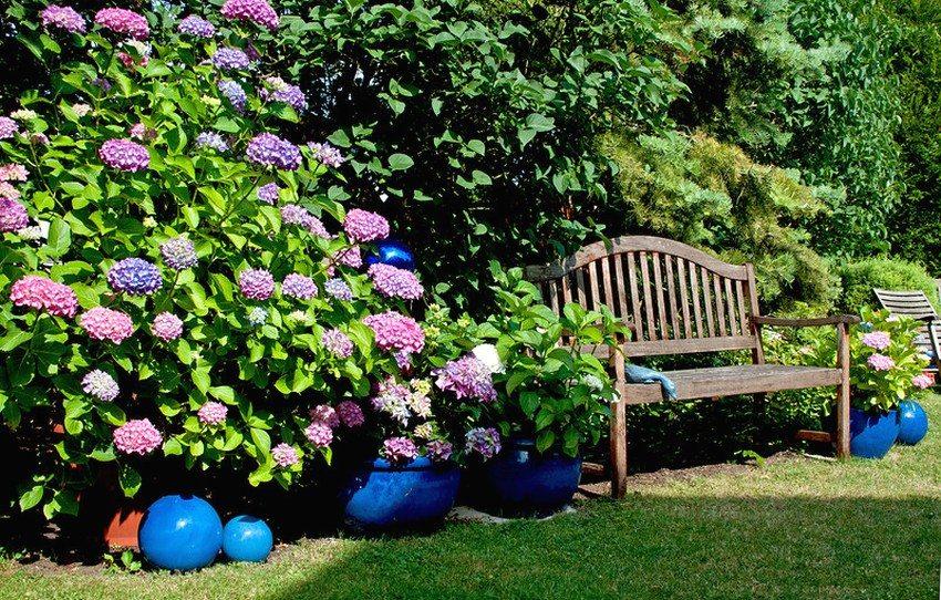 Деревянная скамейка со спинкой использована для организации зоны отдыха в саду