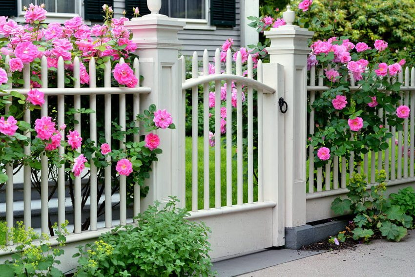 Белый забор с просветами очень выигрышно смотрится в сочетании с цветником