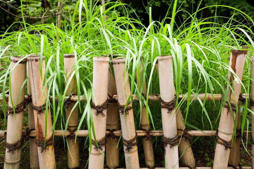 Пример использования бамбука для создания ограждения цветочной клумбы