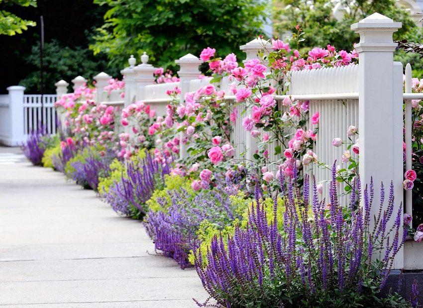 Декоративный белый забор подчеркивает красоту живописного цветника