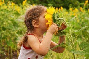 Необходимо проследить, чтобы на участке присутствовали только безопасные для детей растения