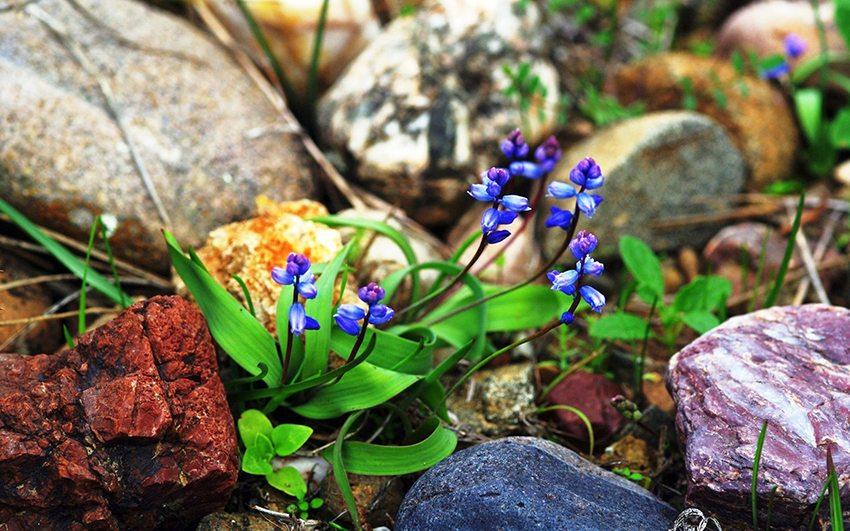 Камни, собранные в поле, устойчивы к погодным и атмосферным воздействиям, поэтому больше подходят для бани, чем собранные в воде