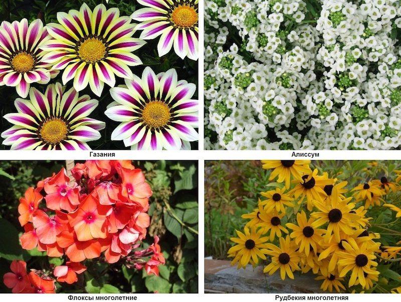 Многолетние цветы уход