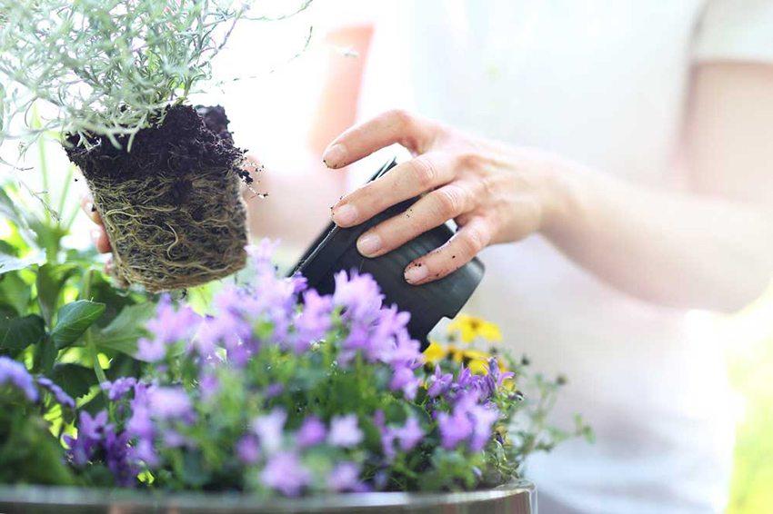 Домашние цветы украсят интерьер лоджии