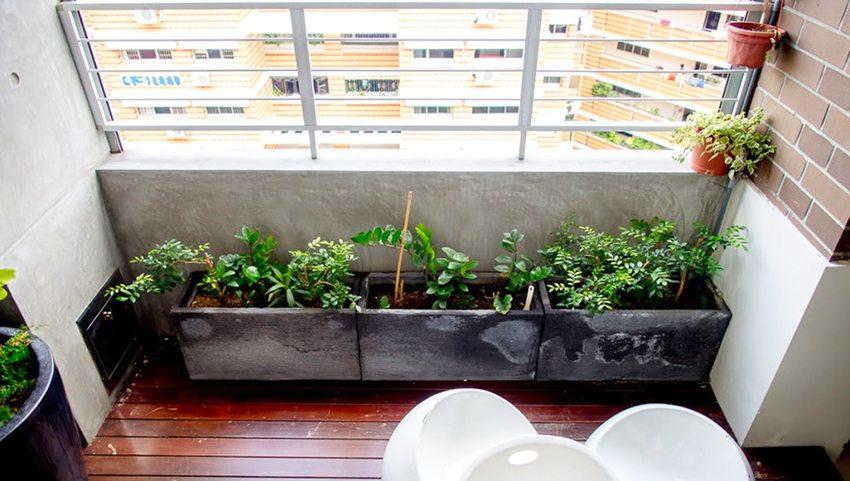 Растения на лоджии получают больше света и подвержены попаданию прямых солнечных лучей