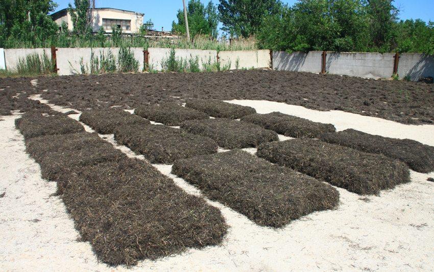 Подготовка утеплителя из водорослей: сушка трапов на солнце