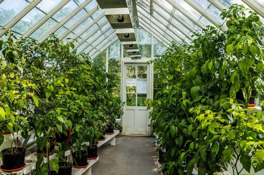 Выращивание овощных культур в парнике