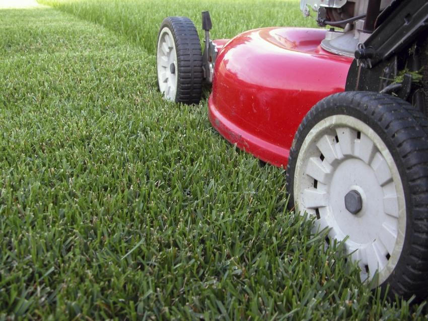 Ухоженный газон на собственном дачном участке – это огромная и трудоемкая работа