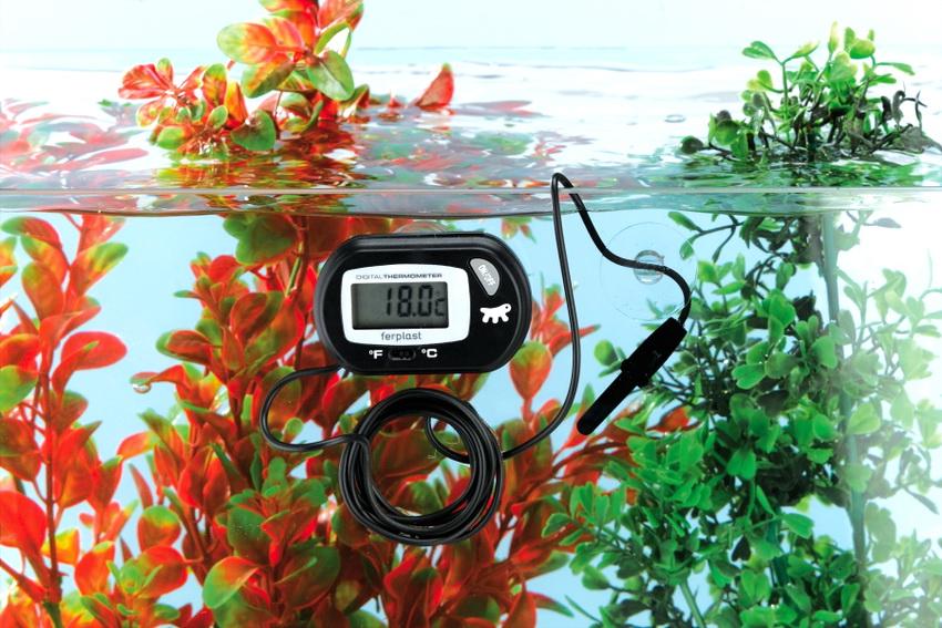 Часто электронные градусники с выносным датчиком используют для измерения температуры воды в аквариуме